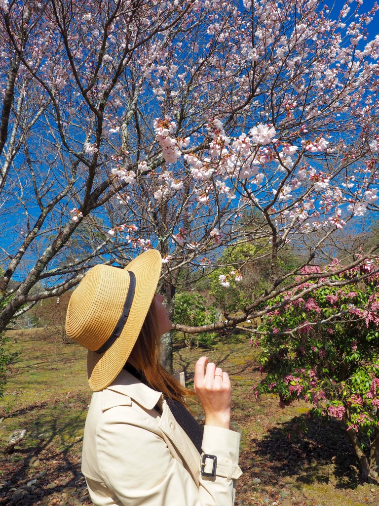 Una guía de Kioto | Mundo de pasión por los viajes
