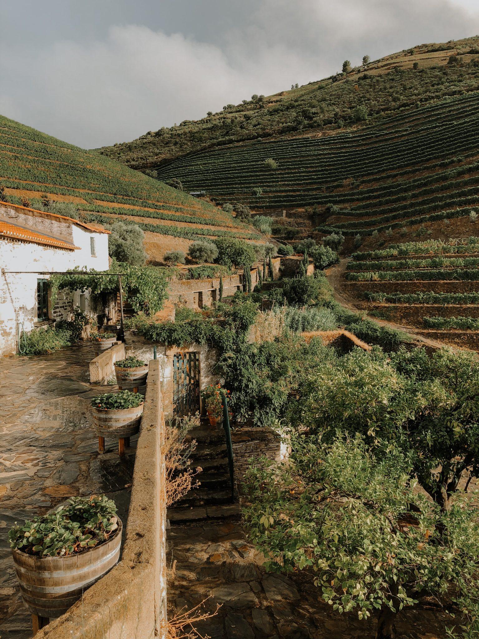 Douro Valley Portugal via Unsplash