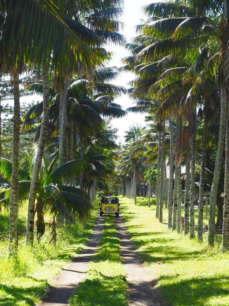 Norfolk Island Australia |  WORLD OF WANDERLUST