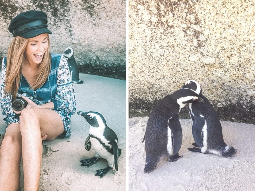 Boulders Beach Day Trip | WORLD OF WANDERLUST