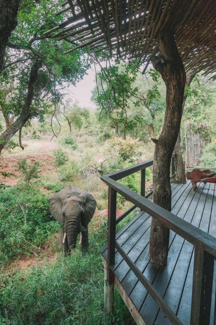 The Ultimate South African Safari: Checking In to Singita Boulders