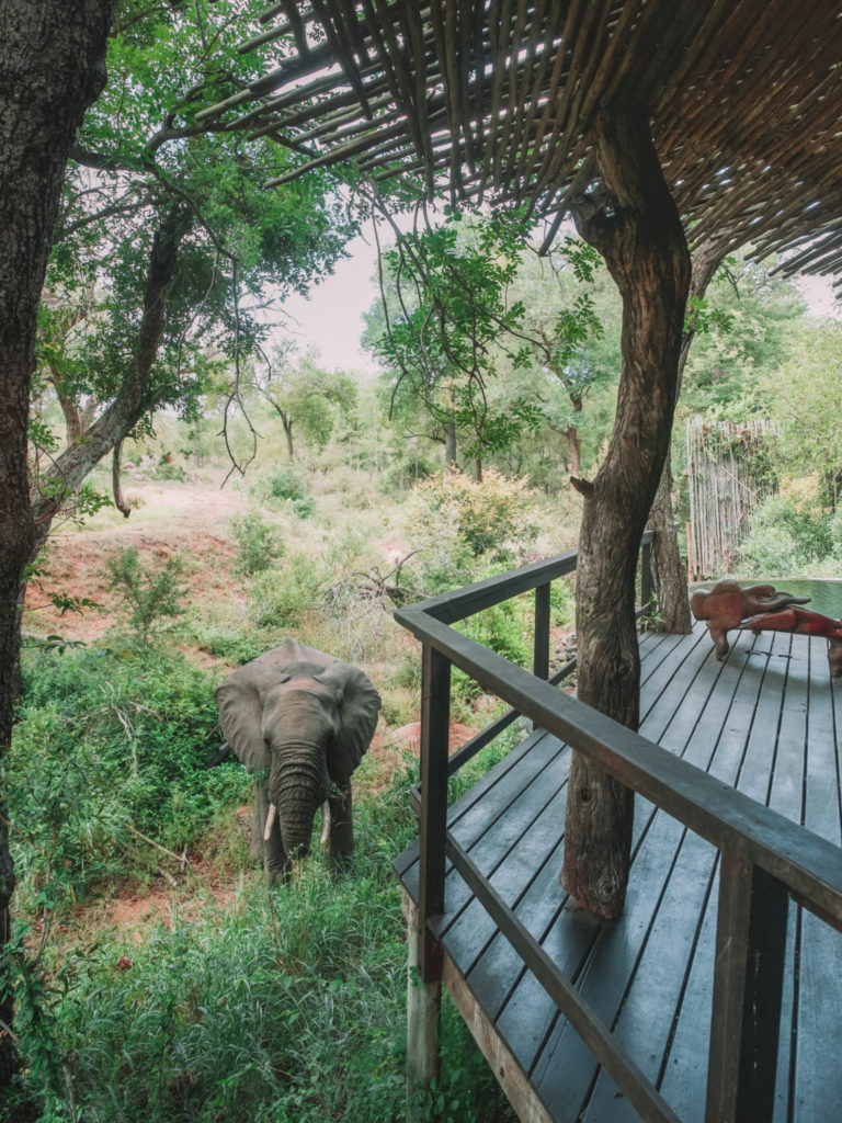 Singita South Africa | WORLD OF WANDERLUST