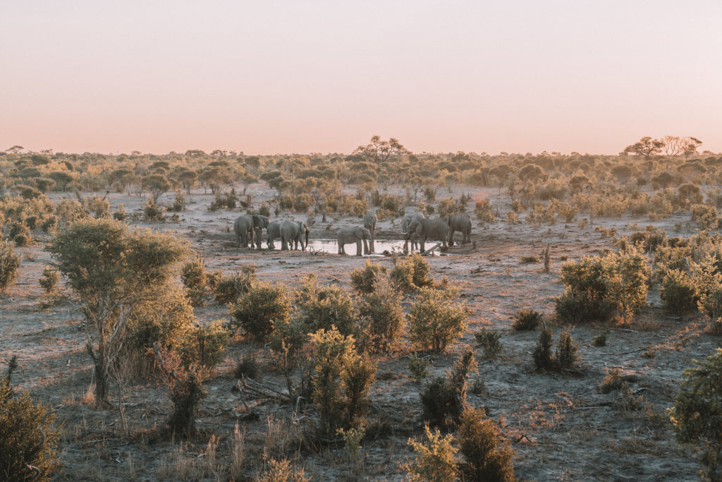 Sable Alley Botswana | WORLD OF WANDERLUST