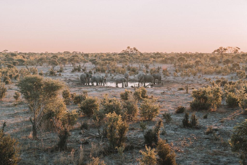 Sable Alley Botswana   WORLD OF WANDERLUST