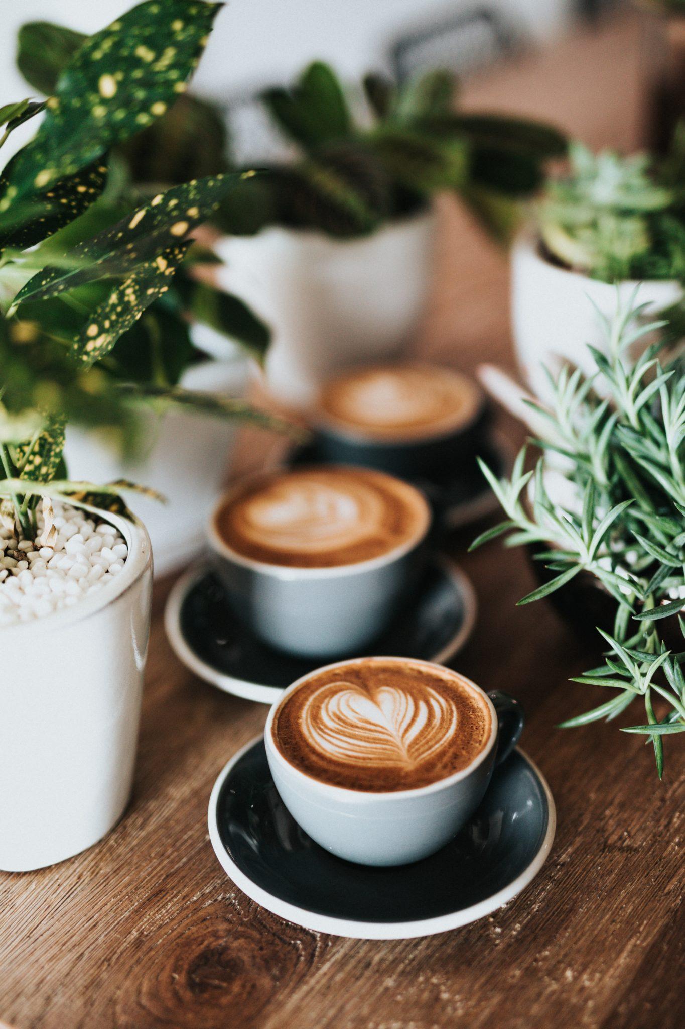 Best Coffee Shops in Ljubljana | WOW