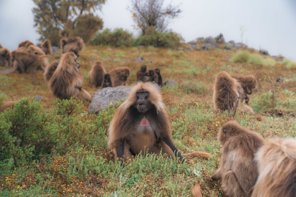 Simien Mountains Ethiopia   WORLD OF WANDERLUST