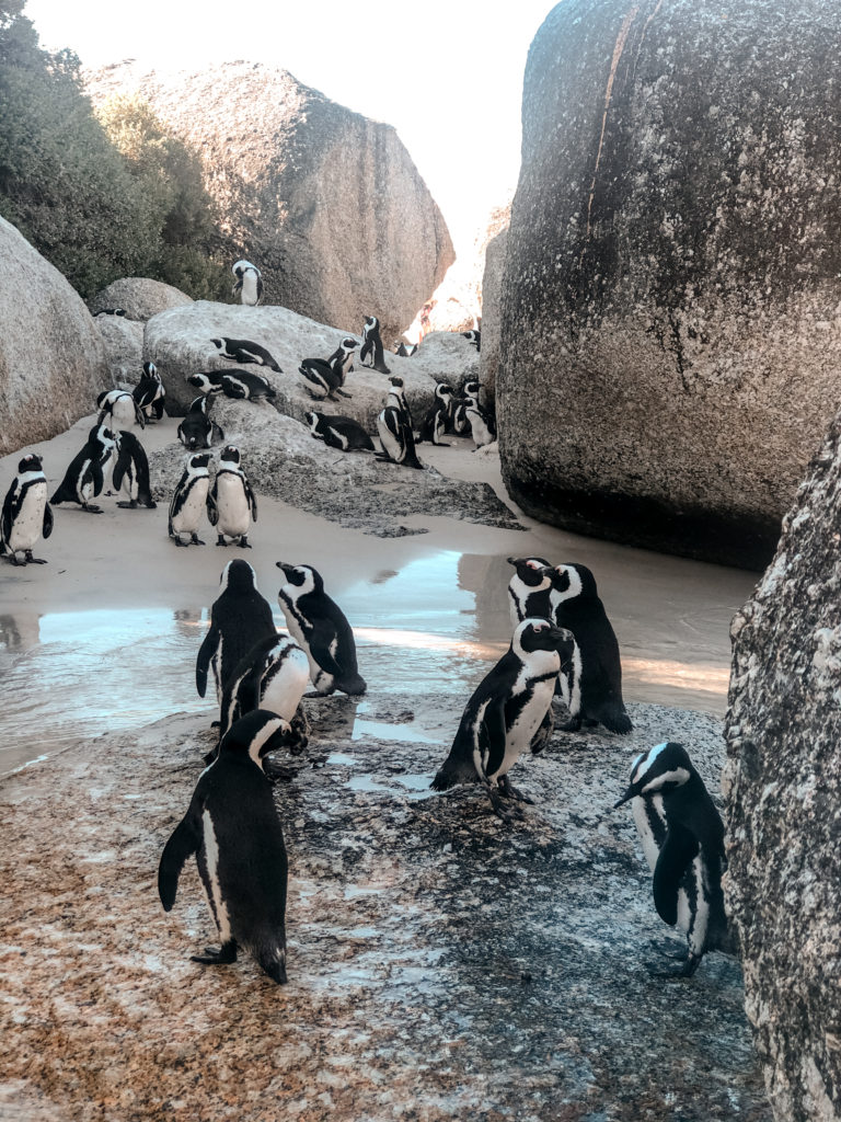 Boulders Beach Cape Town | WORLD OF WANDERLUST