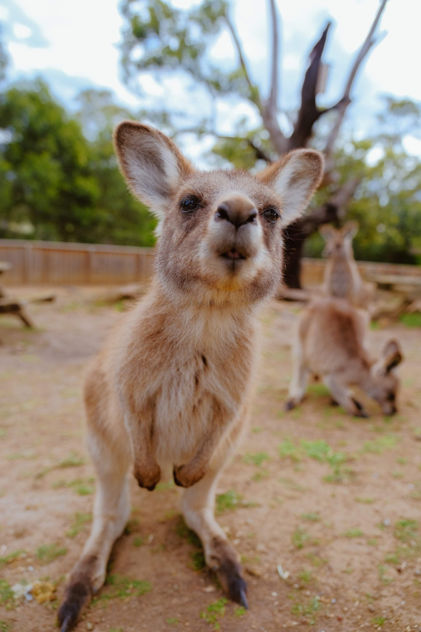 Melbourne things to do | World of Wanderlust